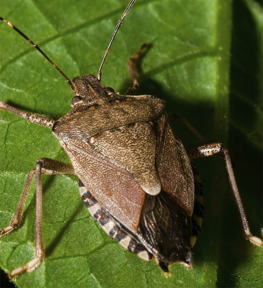 Common Summer Pests of the Northeast