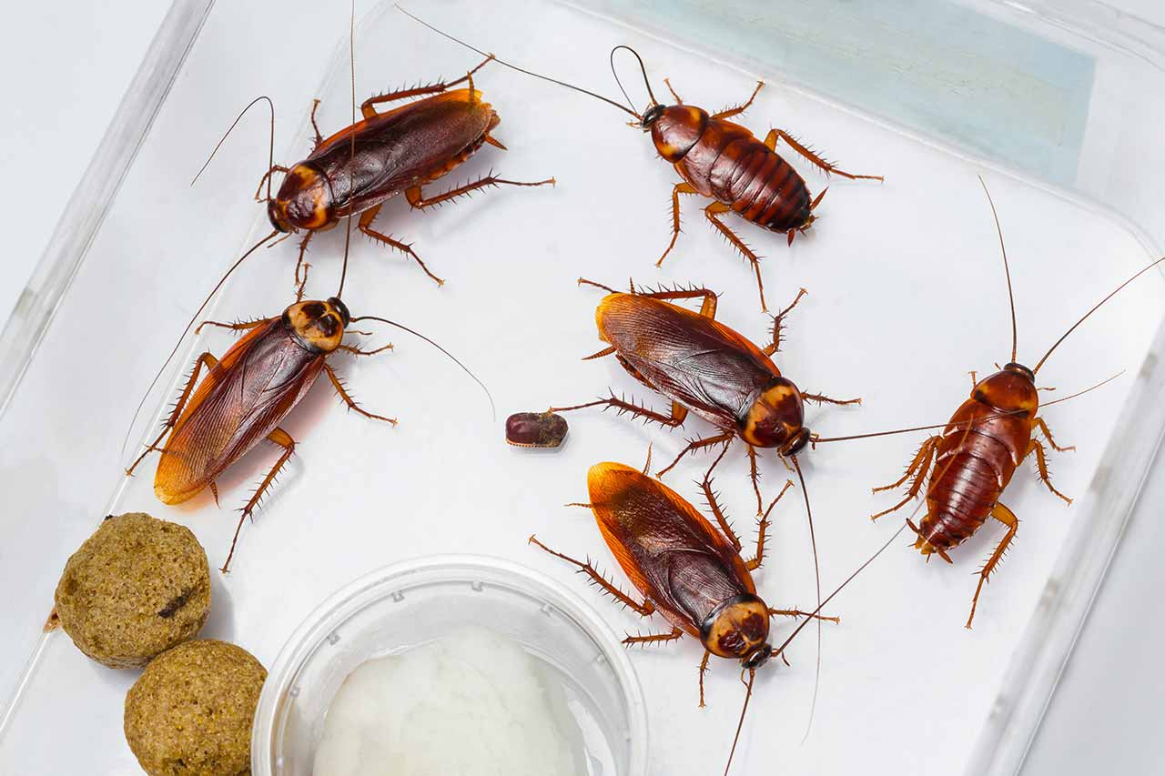 5 Fascinating Facts About Roaches