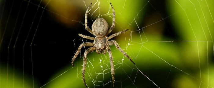 Spiders can come in a variety of shapes, sizes and colors. Learn more interesting facts about these creepy, crawly creatures.