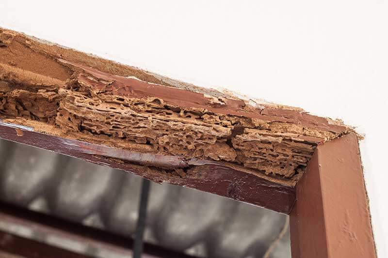 By the time termites are discovered, damage can be extensive.