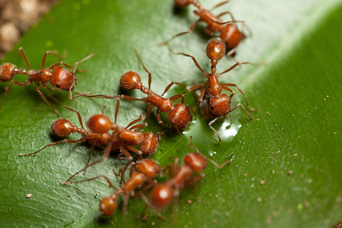 Protecting your lawn from fire ants, and your family and pets from painful fire ant bites, is a battle worth fighting.