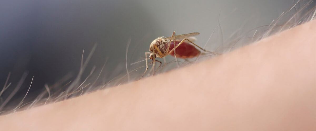 Mosquitoes do not randomly select their victims.