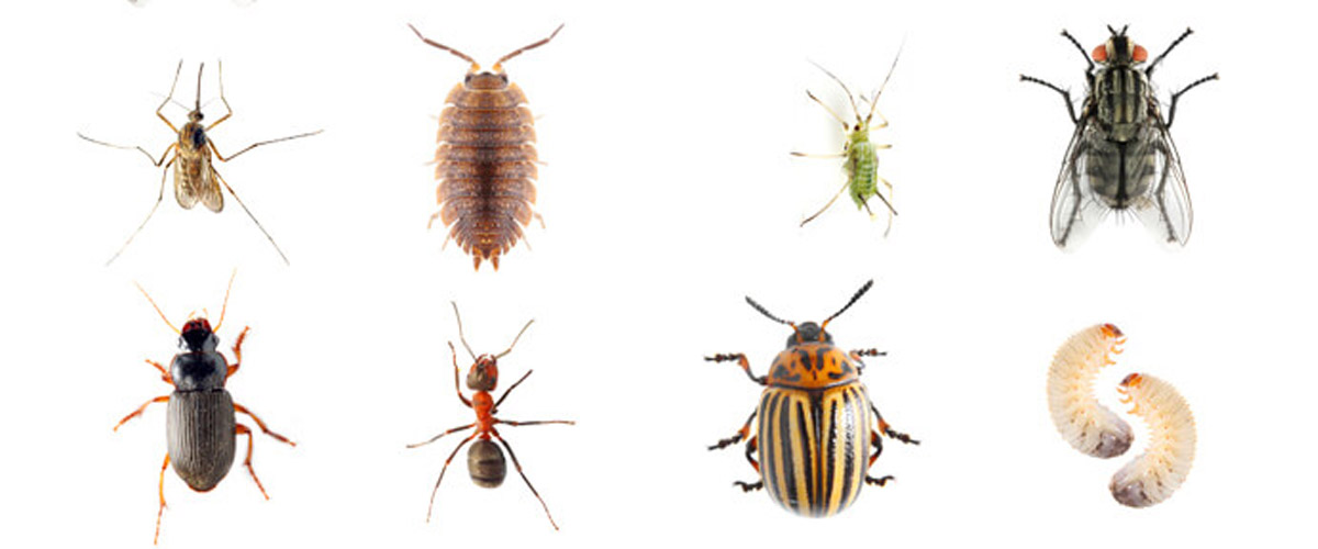Common Insect and Animal Pests by Region