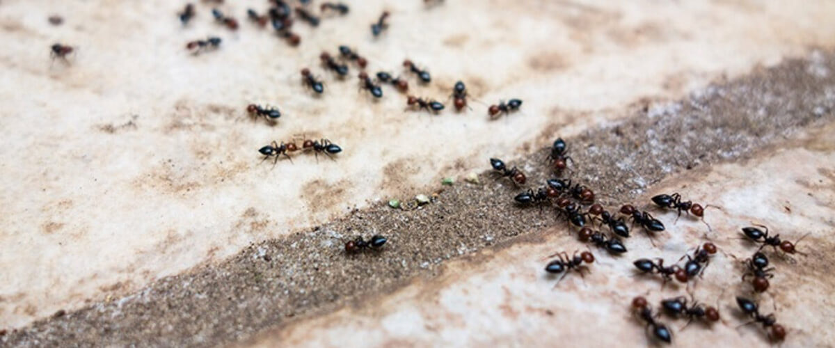 First-Time Homeowners Tips: Tackling Seasonal Pest Control