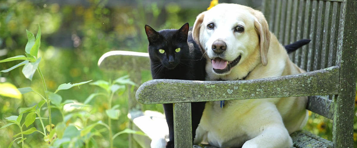 A dog and a cat sitting on a bench together.