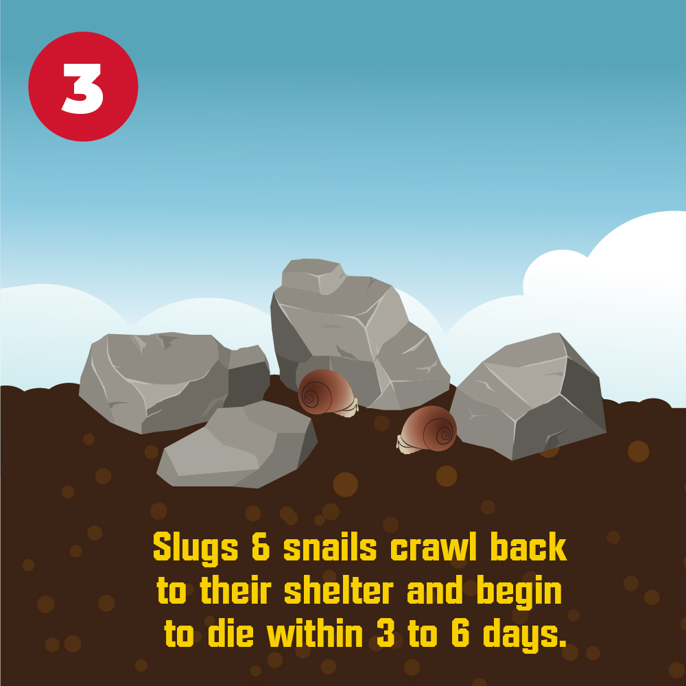 Slugs and snails crawl back to their shelter and begin to die within 3 to 5 days