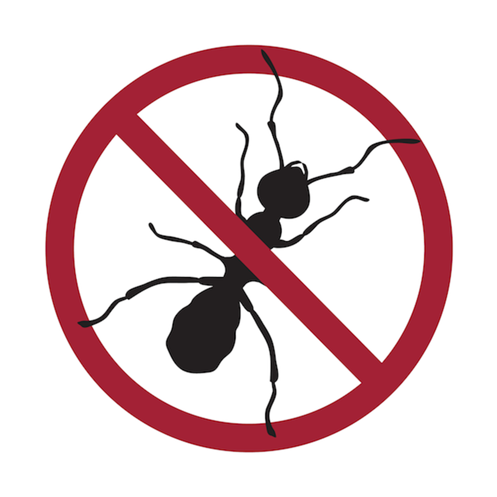 Ant Pest Icon
