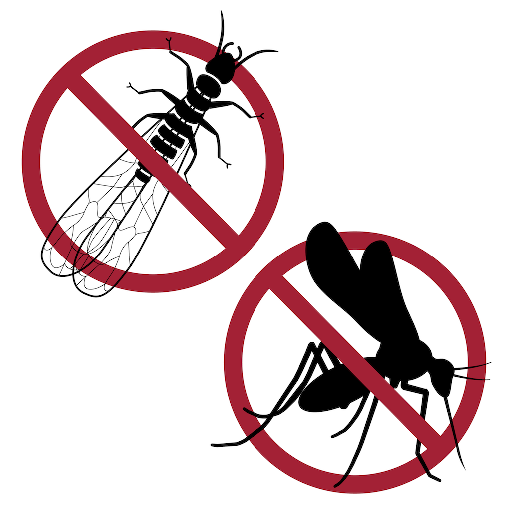 Specific insect pest icons